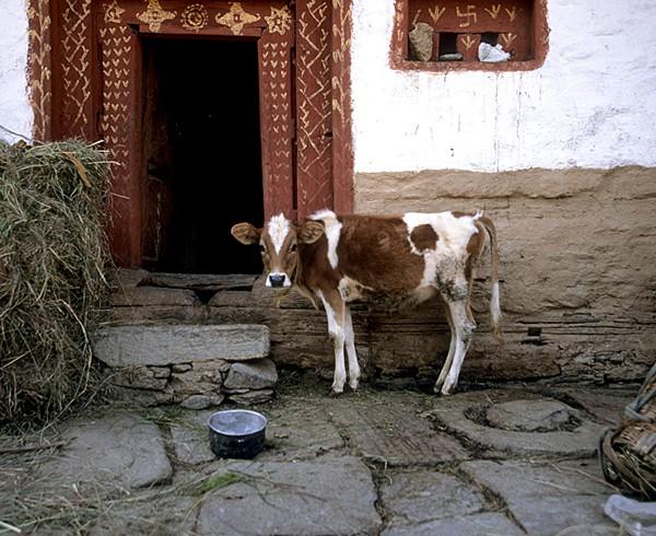 Hauseingang in Alt-Manali.