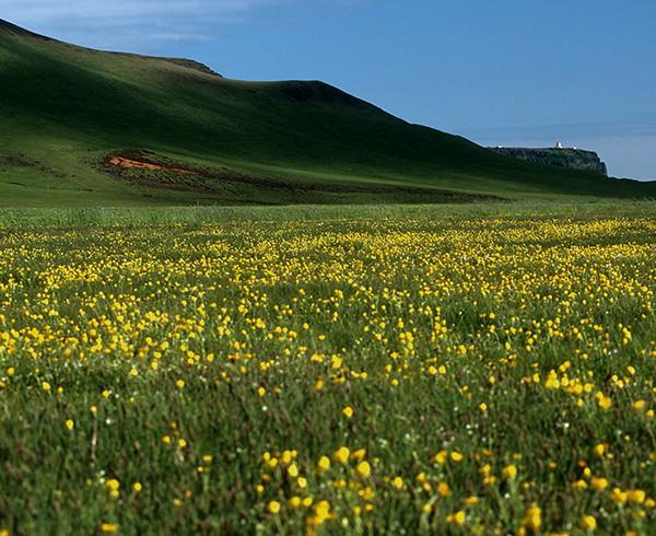 Dyrhólaey von der Landseite aus: Im Juni geht der isländische Sommer ganz aus sich heraus.