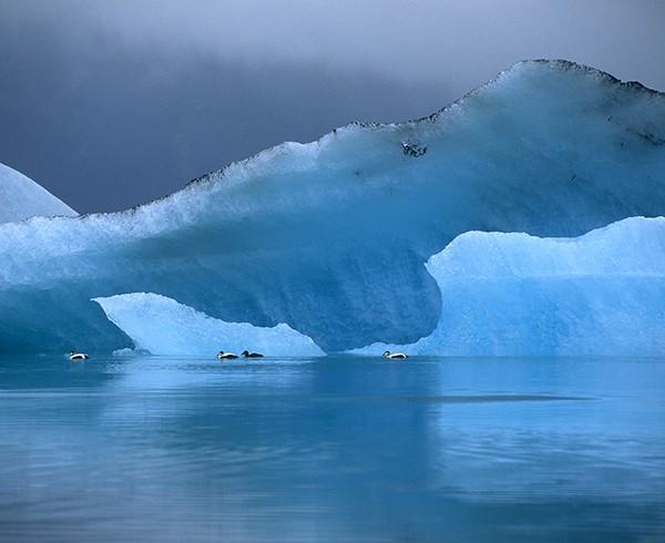Eiderenten auf dem Gletschersee Jökulsárlón.