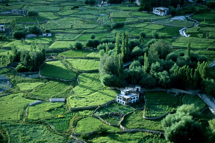 Durch das traditionelle Bewässerungssystem ist Leh auch im Spätsommer eine grüne Oase.